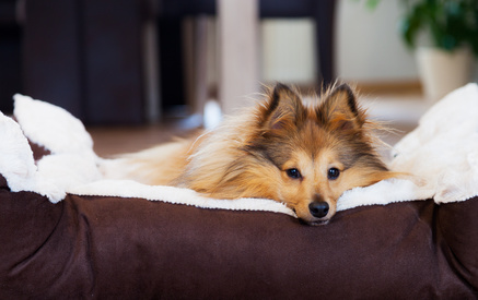 Hundebetten Ratgeber