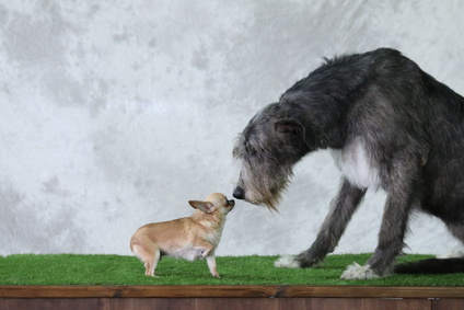 XXL Hundebetten für große Hunde