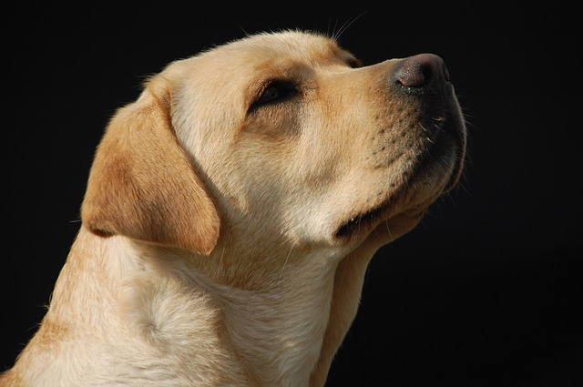 Hundebett fuer Labrador