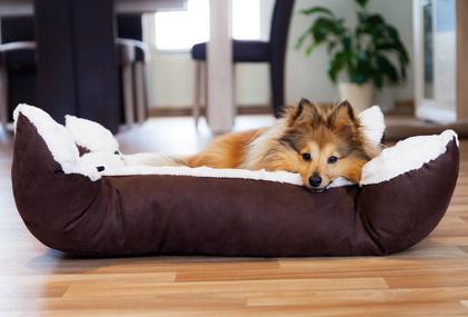 Hundebett kaufen oder selber machen
