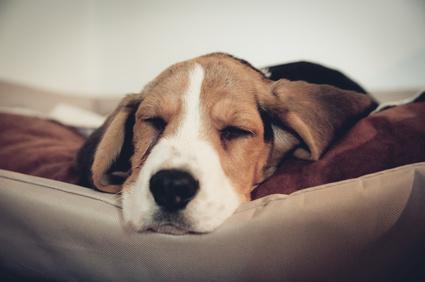 Hundebetten für mittelgroße Hunde